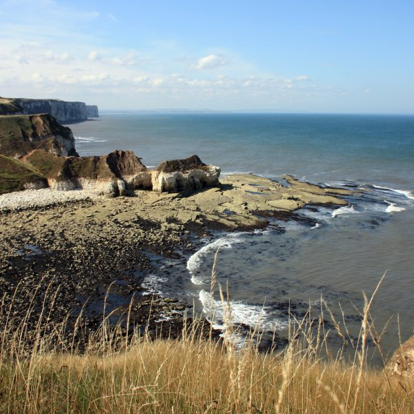Nearby Bempton Cliffs
